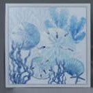 "24"" Square Blue and White Sand Dollar Framed Canvas"