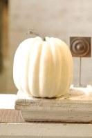 """8"""" Cream Pumpkin"""