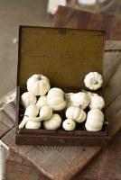Set of 16 Mini Cream Pumpkin & Gourds