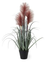 "21"" Mauve Foxtail Grass Potted"