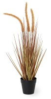 "22"" Amber Dogtail Grass Potted"