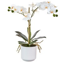 """18"""" White Orchid In White Pot"""