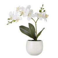 """12"""" White Orchid In White Pot"""