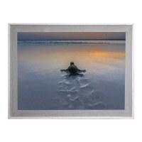 "30"" x 42"" Baby Turtle at Sunset Framed Gel Print"