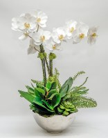 """27"""" White Orchids and Succulents in Silver Bowl"""