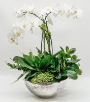 """29"""" White Orchid Trio and Succulents in Large Silver Bowl"""