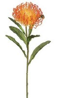 "26"" Faux Orange Open Needle Protea Spray"