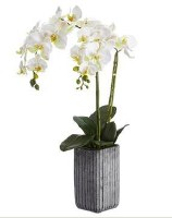 "28"" Faux Double White Phaleo Orchid Plant in Cement Pot"