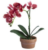 """11"""" Faux Pink Phaleo Orchid Plant in Terracotta Pot"""