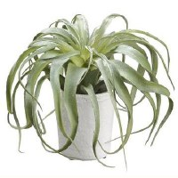 "8"" Faux Green Tillandsia in White Pot"