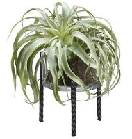"12"" Faux Green Tillandsia in Glass Vase With Black Roped Metal Stand"