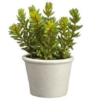 "7"" Faux Green and Red Stonecrop Sedum in Paper Mache Pot"