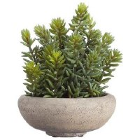 "9"" Faux Green and Red Stonecrop Sedum in Gray Cement Pot"