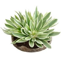 """8"""" Faux Green and Cream Echeveria in Low Brown Cement Pot"""