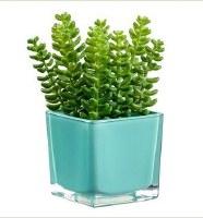 """6"""" Faux Green Sedum in Square Aqua Glass Vase"""