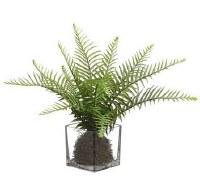 "11"" Faux Green Sword Fern in Square Glass Vase"