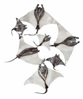 """25"""" White and Silver Metal and Capiz Stingray School Wall Plaque"""
