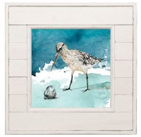 """14"""" Square Sandpiper Snail Shell in Distressed White Shiplap Frame"""