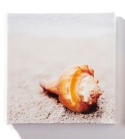 """8"""" Square Shell on Beach Canvas Wall Art"""