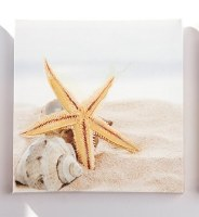 """8"""" Square Starfish and Shell on Beach Canvas Wall Art"""