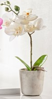 "13"" Faux White Orchid in Gray Cement Pot"