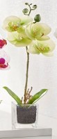 "13"" Faux Green Mini Orchid in Square Glass Pot"