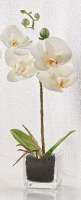 "13"" Faux White Mini Orchid in Square Glass Pot"