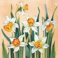 """5"""" Square White Narcissus on Apricot Beverage Napkin"""