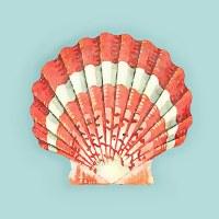 """18"""" Square Coral Striped Scallop Shell Pillow"""