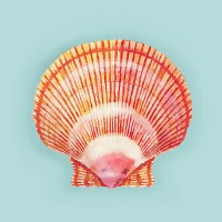 """18"""" Square Coral and Yellow Scallop Shell Pillow"""