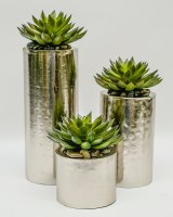 Set of 3 Succulents in Silver Cylinders
