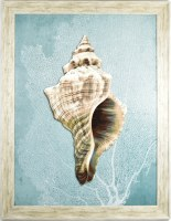 """45"""" x 35"""" Gray Foxshell With Blue Background in Gray Frame"""