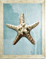 """45"""" x 35"""" Gray Starfish With Blue Background in Gray Frame"""