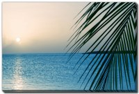 """38"""" x 60"""" Palm on Water Canvas Wall Art"""