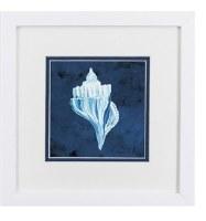 "11"" Square White and Blue Whelk on Dark Blue Background in White Frame"