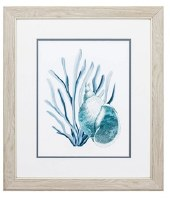 """22"""" x 19"""" Blue and Green Turbo Shell in Seaweed in Wood Frame"""