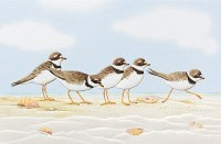 """5"""" x 8"""" Playful Plovers Thinking Of You Card"""