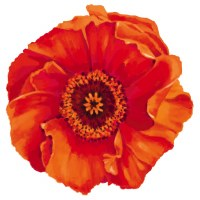 "4"" Orange Poppy Radiant Floral Screen Saver"