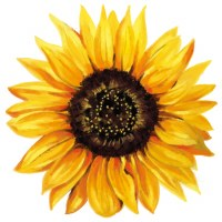 "4"" Yellow Sunflower Radiant Floral Screen Saver"