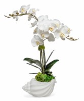 """29"""" Double White Orchid in White Ceramic Conch Shell"""