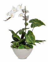 """27"""" White Orchid in White Cement Bowl"""