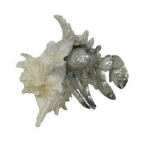 """7"""" Silver Polyresin Hermit Crab in Shell"""