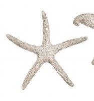 "4"" Faux Champagne Gold Thin Arm Starfish"