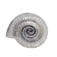 """11"""" Taupe Crackle Glass Nautilus Shell Plate"""
