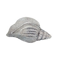 """13"""" Taupe Crackle Glass Conch Shell Plate"""