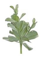 """15"""" Faux Sage Coastal Succulent"""