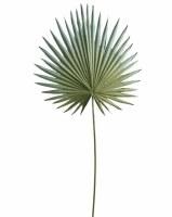 "30"" Faux Light Green Gray Palmetto Leaf Spray"
