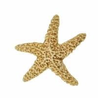 "2 - 4"" Beige Medium Sugar Starfish"