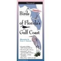 "9"" Birds of Florida's Gulf Coast Folding Laminated Guide"