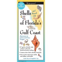 "9"" Shells of Florida's Gulf Coast Folding Laminated Guide"